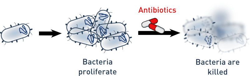 Superbug – what antibiotics should be selected?